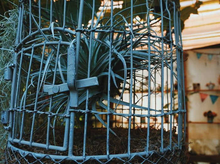 Close-up of metal in cage