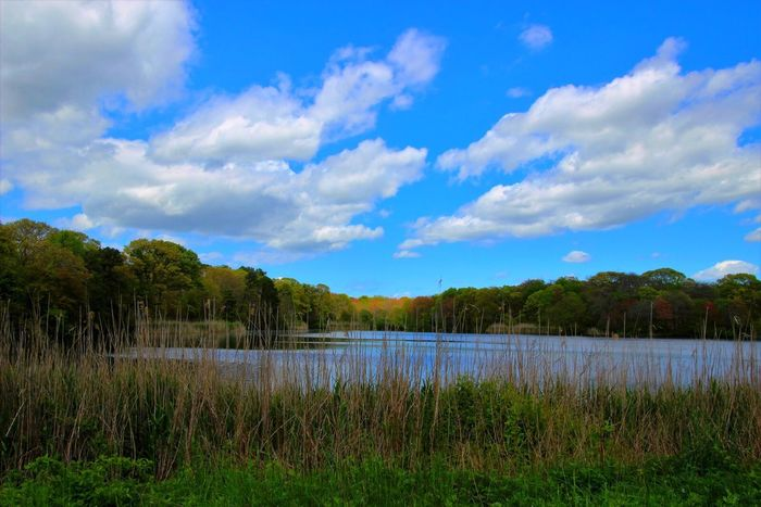 Beauty In Nature Scenics Tranquil Scene Lake Trees And Bushes water clouds Sky Tranquility Green Color No People