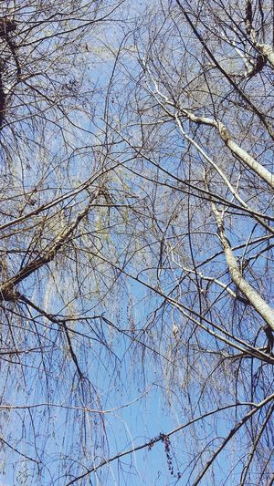 Sky No People Low Angle View Full Frame Backgrounds Tree Outdoors Day Nature Close-up