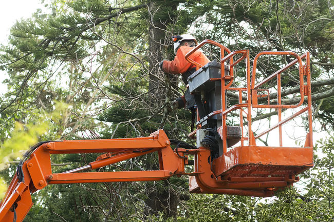 gardener worker pruning trees with safety equipment in crane vehicle Crane Crane - Construction Machinery Gardener Gardener Worker Outdoors Park Park Tree Park Trees Tree Tree Trees Worker In Action Working