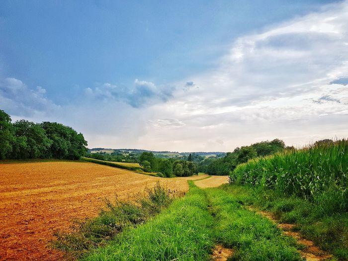 Farmland Nature