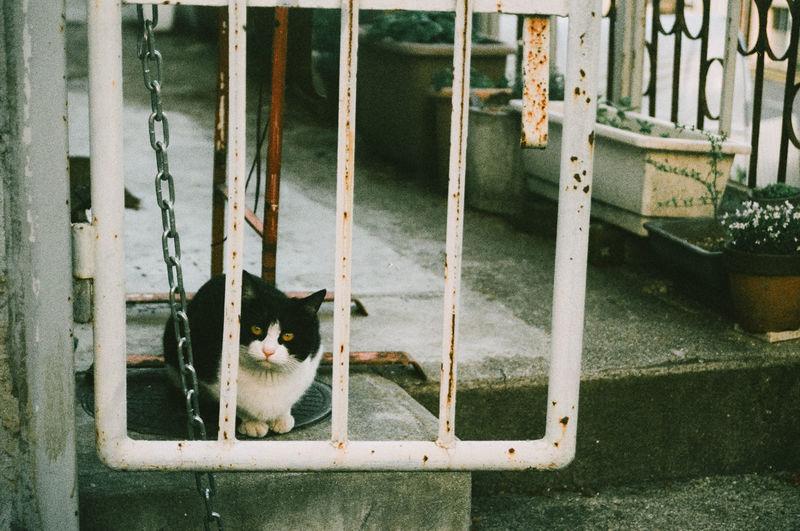 Portrait Of Cat Seen Through Railing