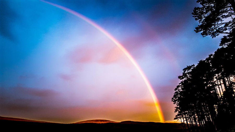 Low angle view of rainbow over trees