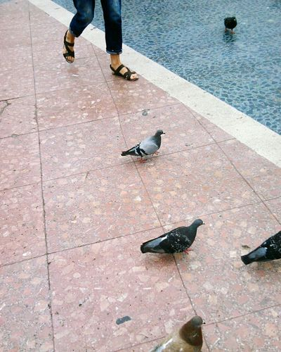 Mobilephotography Mobile Photography Streetphotography Street Photography Walking Pidgeons Barcelona