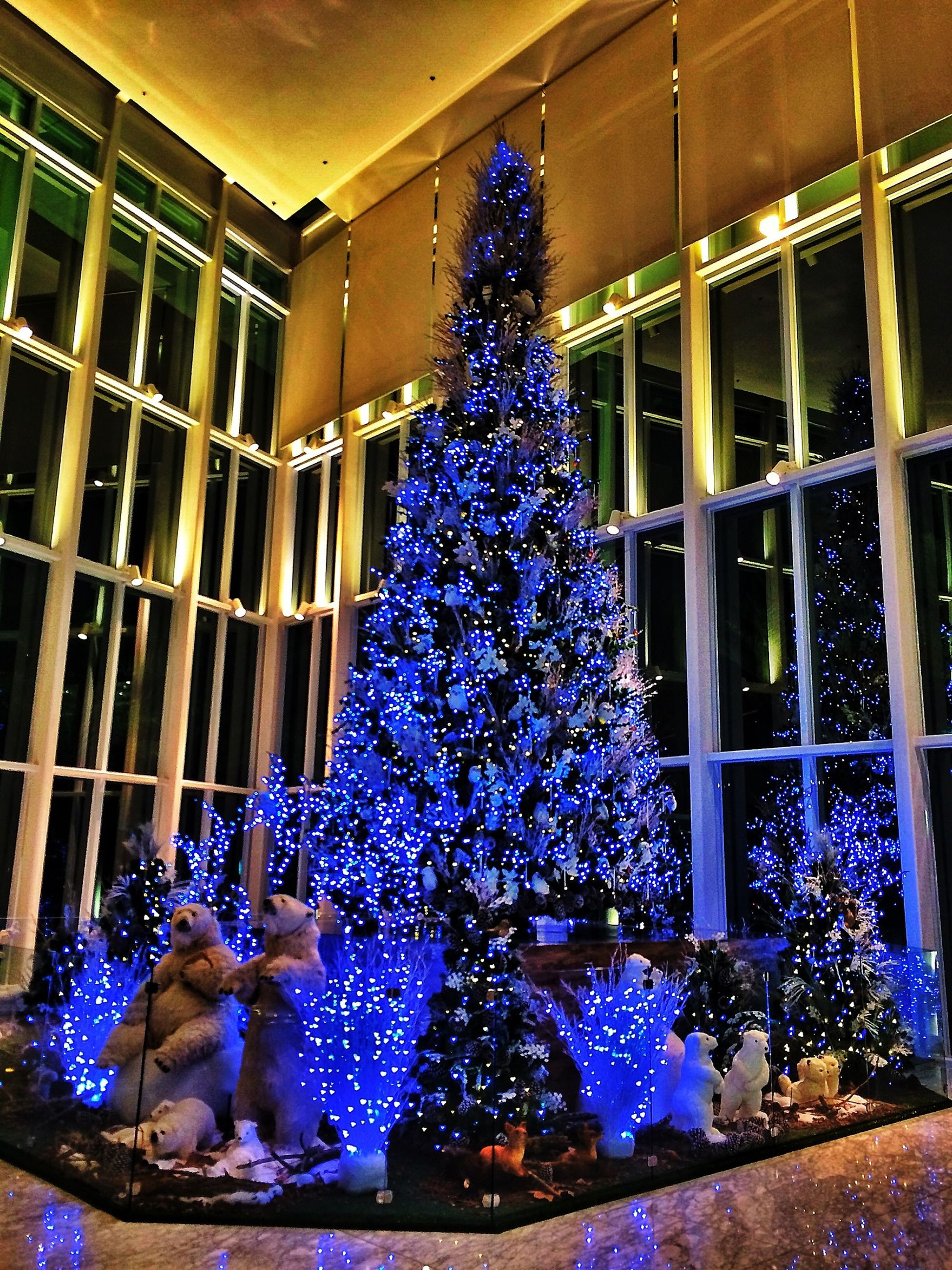 architecture, illuminated, built structure, window, building exterior, decoration, celebration, blue, hanging, multi colored, night, lighting equipment, christmas tree, building, indoors, christmas, low angle view, house, purple, christmas decoration