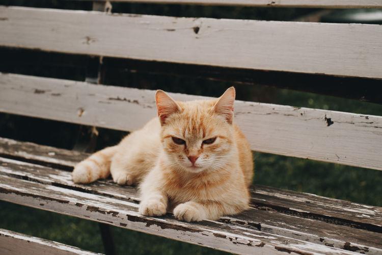 A super cute kitty