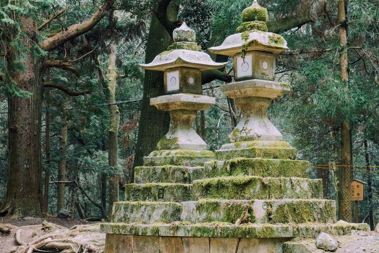 Nara Nara,Japan Lantern Stone Lantern Toro Toro Japan Travel Japan Photography Japanese Temple Japanese Shrine Japanese Architecture Japanese Traditional
