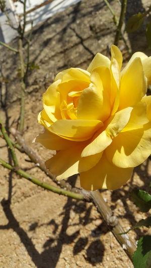 Bully Bully Flower Flower Beautiful Nature ❤❤ Beautiful Nature Nature Photography Nature Collection 🌷 Flowers 🌹 Beautiful Flowers 🌸 🌸 Nature 🌸Nature🌸 🌸flower🌸 🌼❤❤👍👌💋 🌸 Flowers In My Garden 🌸🌿 🌸🌸🌷 ❤️❤️😍😍 🌸~ 😍😌😊 ⚘🌼🌷🍀🌿🌹💐🌸 ⚘🌷 ⚘ 🌸 Good 🌺🌹🌷flower ⚘⚘