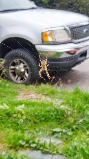 Fresh 3 Spider