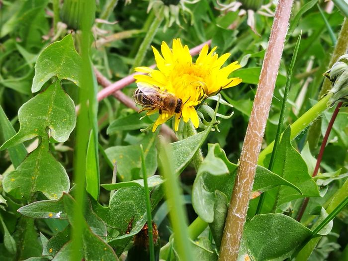 Day Nature Plant Bee Flower Freshness