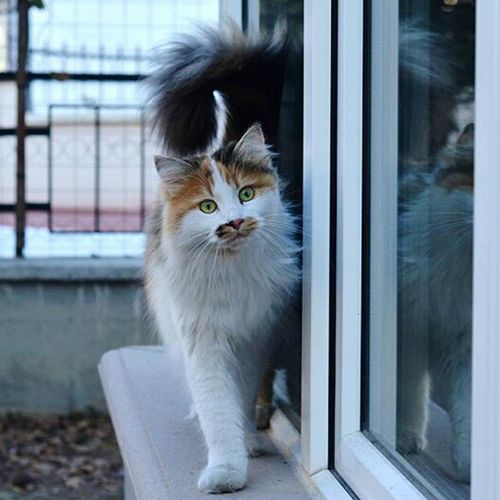Domestic Cat Domestic Animals Humor Animal Looking Animal Hair Kitten Greeting Feline No People Animal Themes Indoors  Eye One Animal Cute Portrait Standing Mammal Day Pets Cat Cats Cats Of EyeEm EyeEmNewHere Nature