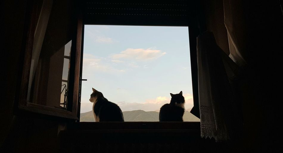 Silhouette cat looking through window