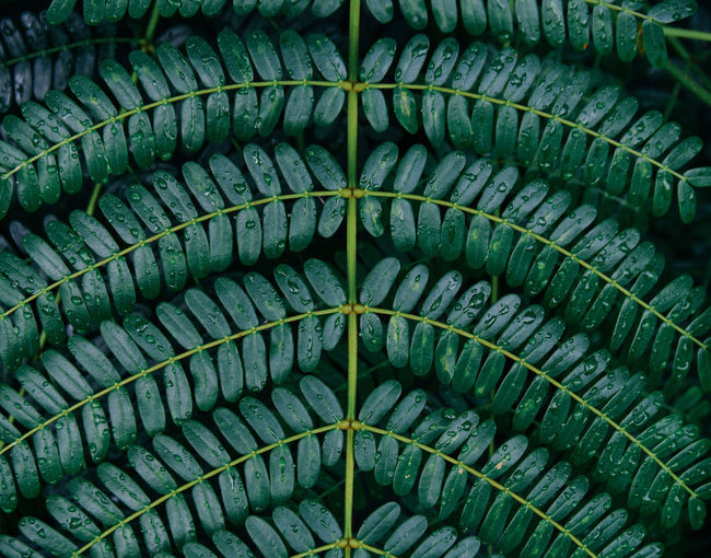 Background of green leaves Backgrounds Beauty In Nature Close-up Day Full Frame Green Color Growth Leaf Natural Pattern Nature Pattern Plant Part Textured