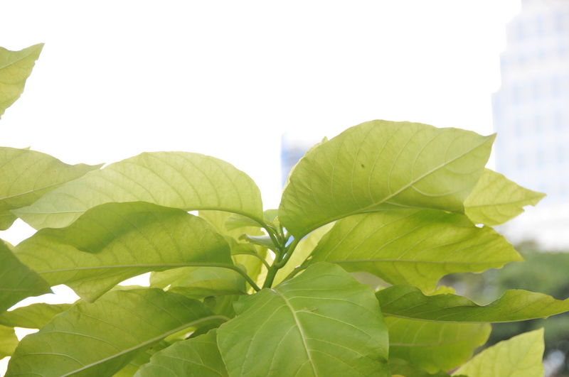 Beauty In Nature Close-up Day Freshness Green Color Leaf Nature No People Outdoors