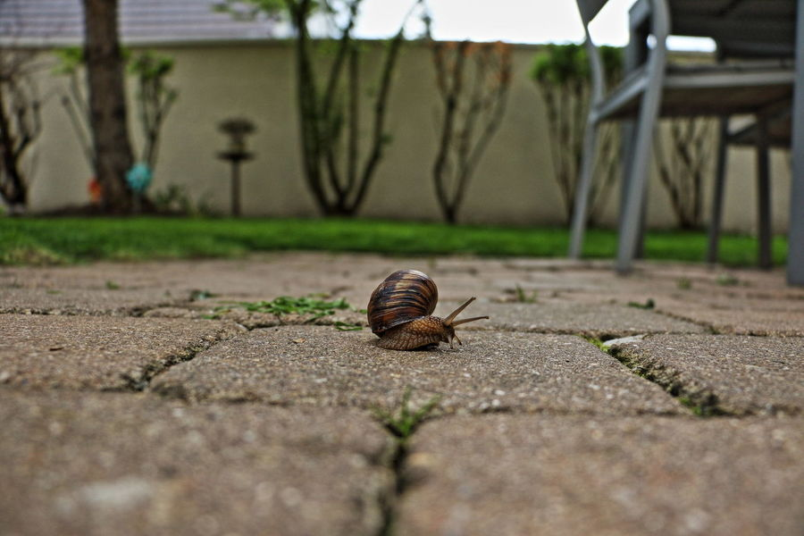 Dramatic Angles France Outdoors Paris Snail Zoology Perspectives On Nature