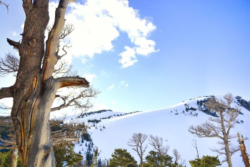 Mountains Glacier Trees Nature Colorado Snow Sunshine Hike