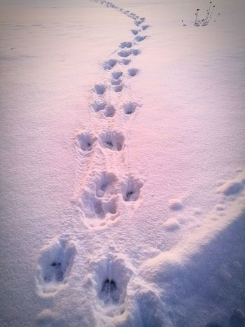 Moose Tracks Winter Track - Imprint High Angle View Paw Print Pattern Animal Track Backgrounds No People Nature Full Frame Sand Close-up Snow Cold Temperature Outdoors Day Beauty In Nature