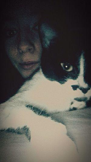 Chaton calinou, soirée réussi ? Chat Cat Love Calin Sweety