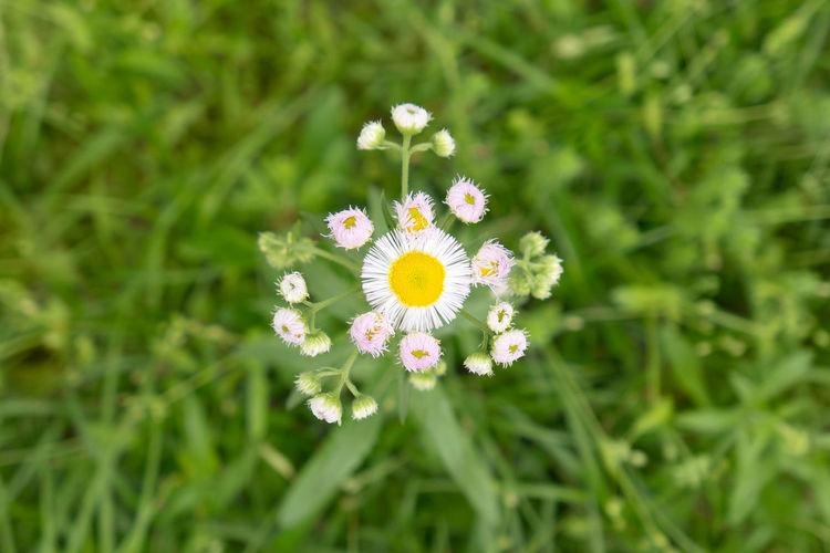 Flowers blooming in garden