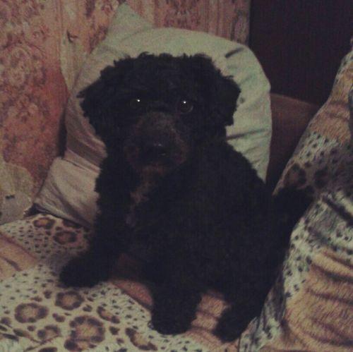Простите за качество, на этой неделе выберемся и пофоткаю заю ❤ а пока вот, подстригла Чапу Dog Love с: My Dog <3 I Love My Pet Chapa Dog