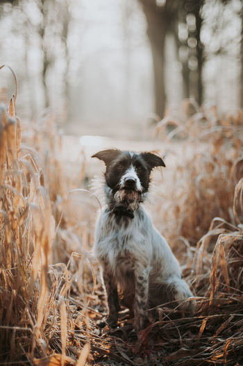Portrait of dog standing on field