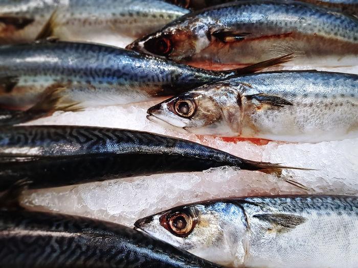 Close-up frozen saba mackerel fish for sale at supermarket