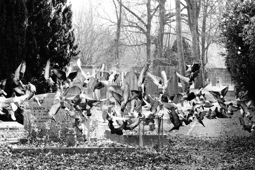 Blackandwhite Cemetery Flying Bird Jewish Cemetery Leaves No People No Photoshop Outdoors Pigeon Sony A6000 Large Group Of Birds Autumn Leaves On Ground