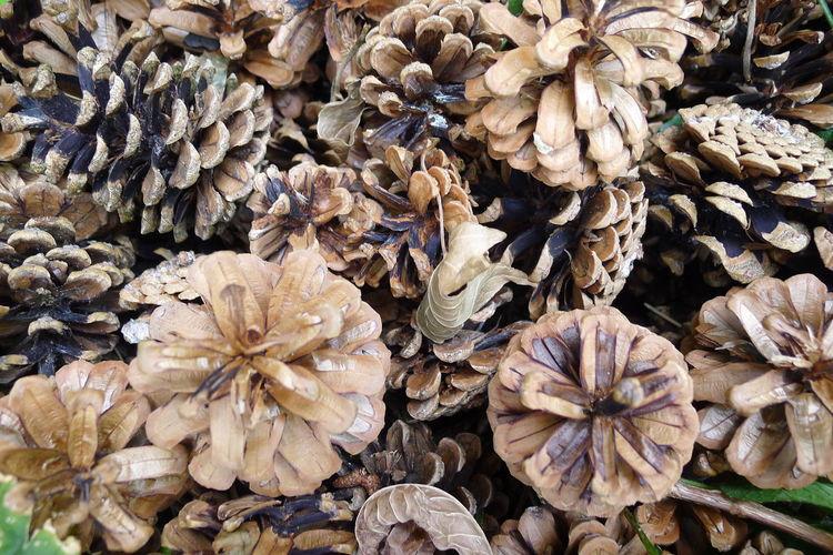 Full frame shot of wilted flower