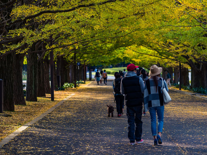 Rear view of man and woman walking on street amidst trees during autumn
