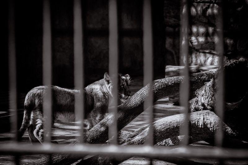 渴望出逃 No People Selective Focus Day Close-up Window Outdoors Focus On Foreground Nature Still Life Animal Cage Metal Animal Themes Glass - Material Mammal Architecture Barrier Built Structure Fence