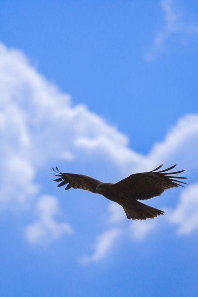 Kite Flying Blusky