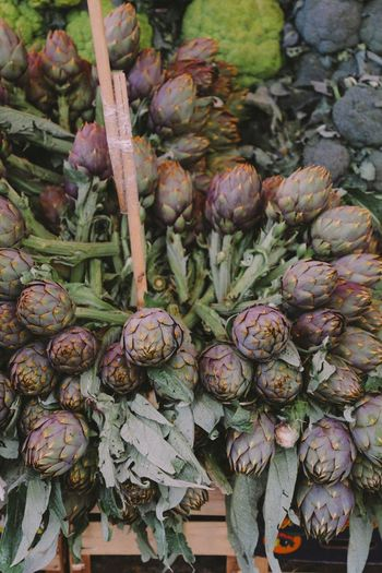 Vegetable Healthy Eating Artichoke Organic Food Freshness Food And Drink Market Market Stall Raw Food Agriculture No People Outdoors Day Backgrounds Close-up Thistle Nature Sicily Palermo