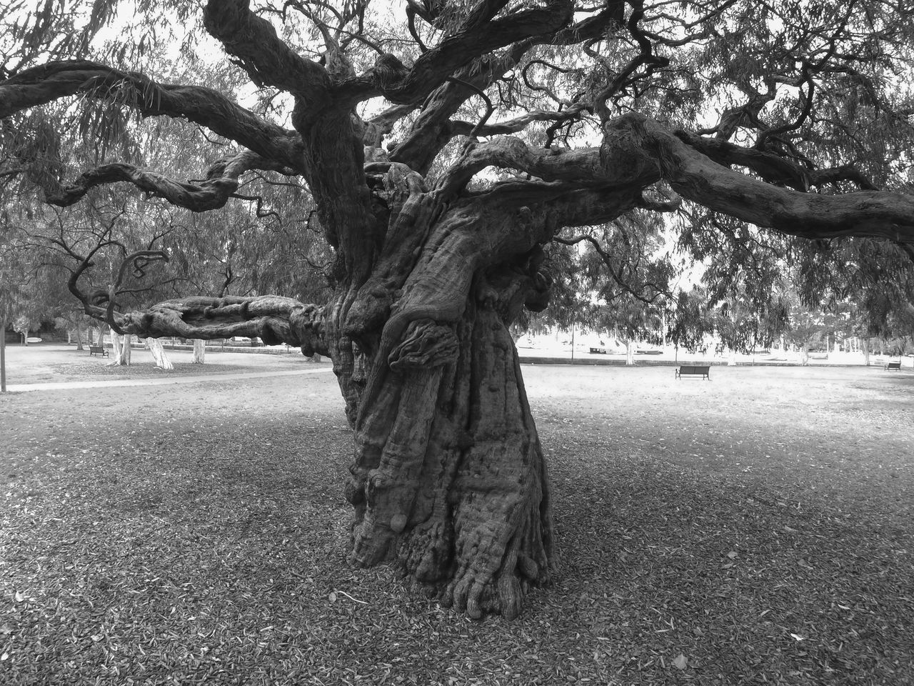 tree, plant, tree trunk, trunk, nature, day, growth, outdoors, park, full length, field, land, real people, grass, park - man made space, transportation, standing, one person, beauty in nature