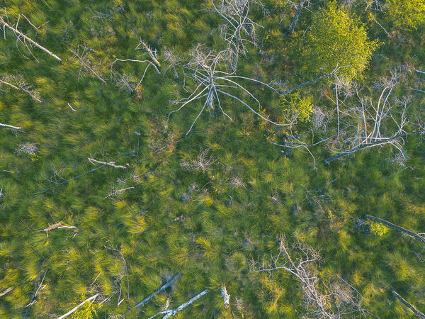 Swamp, drone aerial view. Kaunas county, Lithuania DJI Mavic Pro DJI X Eyeem Drone  Kaunas County Lietuva Lithuania Nature Nature Swamp Aerial Animal Animal Themes Beauty In Nature Day Dubrava Europe Full Frame Green Color Group Of Animals Growth High Angle View Lake Lithuania Travel Mavic Mavic Pro Nature No People Outdoors Plant Tranquil Scene Tranquility Tree Water Waterfront