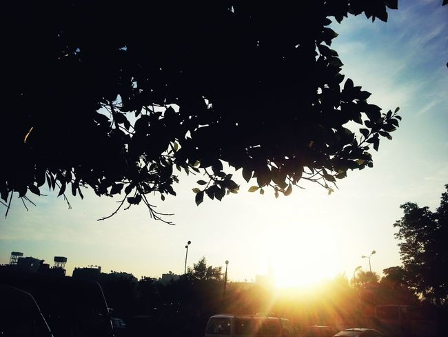 Tree Silhouette No People Nature Sunset Outdoors Sky Bird Flying Scenics Day Beauty In Nature Defocused