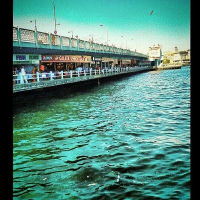 Istanbul Eminönü Galatakoprusu Balikci deniz sea life like4spam instalike turkey fish instagood tagsforlikes toprowforspam photoftheday photo