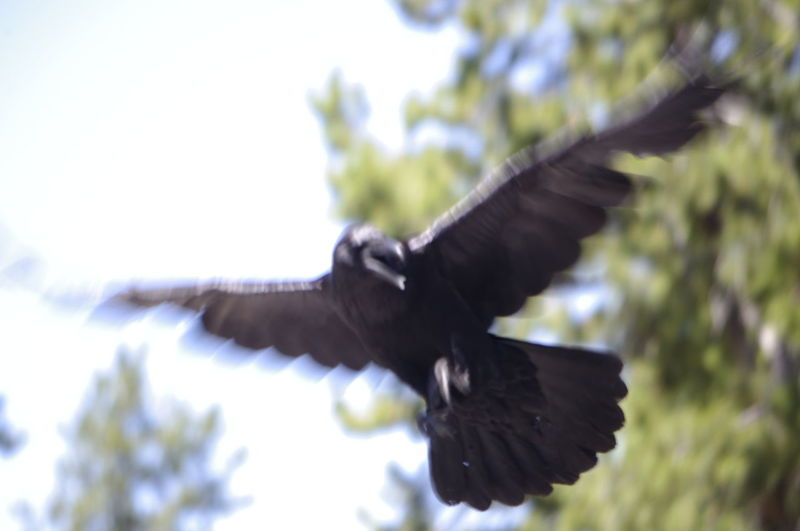 Close-up of bird flying against clear sky