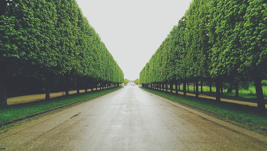 Green Trees Along Empty Road In Versailles