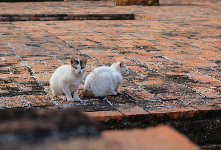 View of two cats