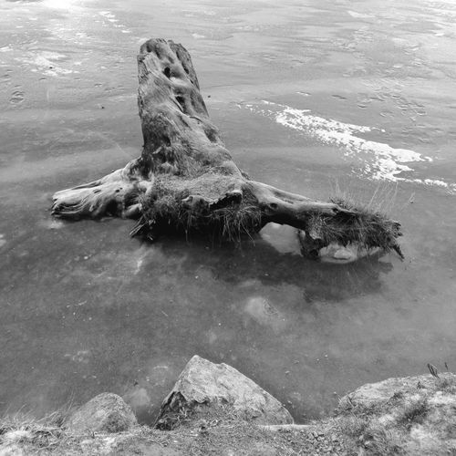 Water Nature No People Outdoors Beauty In Nature Lake Moritz Ice Lake View Sankt Moritz Tree Tree Trunk Trees And Nature Trees And Water Black And White Friday