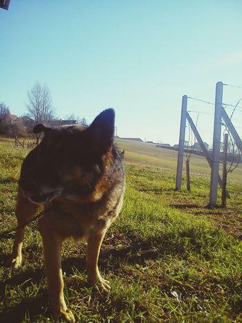 Mybestphoto2015 Croatia Nature Dog Doglover Dog❤ Dog Love