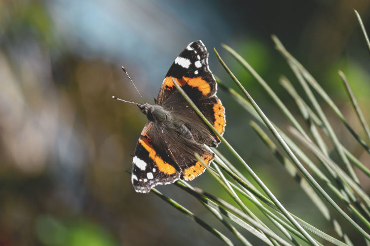 Buterfly Animals In The Wild Animal Themes One Animal Animal Wildlife Animal Insect Invertebrate Butterfly - Insect Animal Wing Beauty In Nature Focus On Foreground Close-up Day Plant Nature No People Butterfly Flower Animal Markings Outdoors Pollination Buterfly