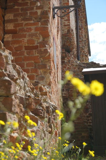 Plants growing on wall of old building