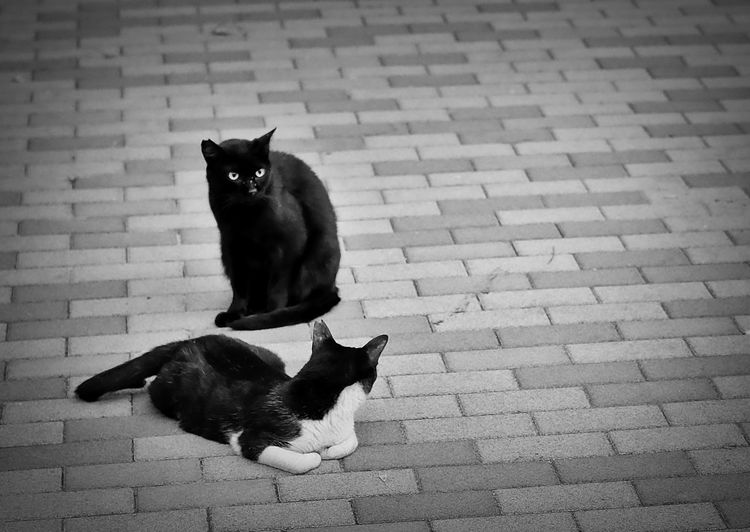Animal Themes Black Cat Black Color Cat Domestic Animals Domestic Cat Looking At Camera Mammal No People Pets Sitting Stray Cat Tokyo Cats