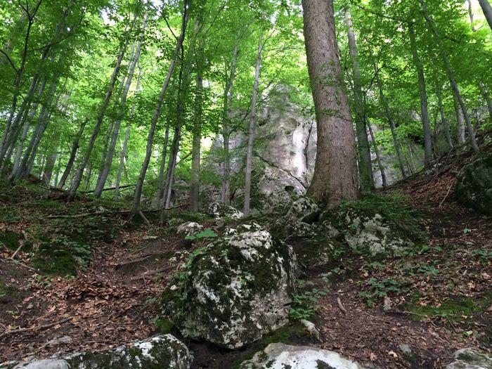 Nature Przyroda Natura Forest