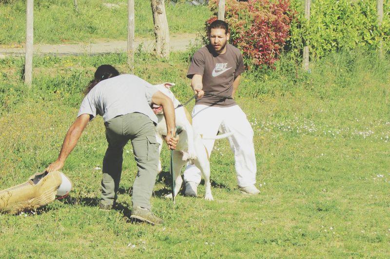 Bulldog Americano Bullam BestInTheWorld Bulldog Bullylove Wow Dog World Of My Bully Bulldog Ram Bull Manolo