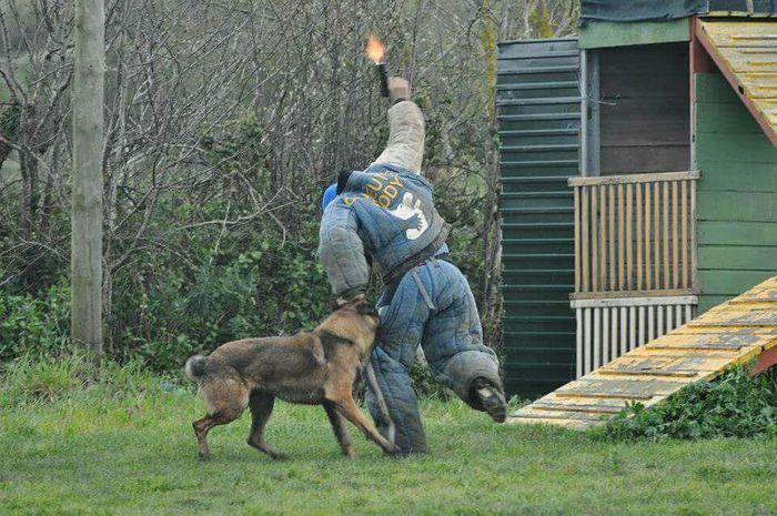 Malinois Dog Training Gan Fhotografy
