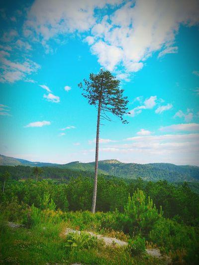 Boğazova Tree Green Blue Bluesky Mountain Tree Sky Grass Cloud - Sky