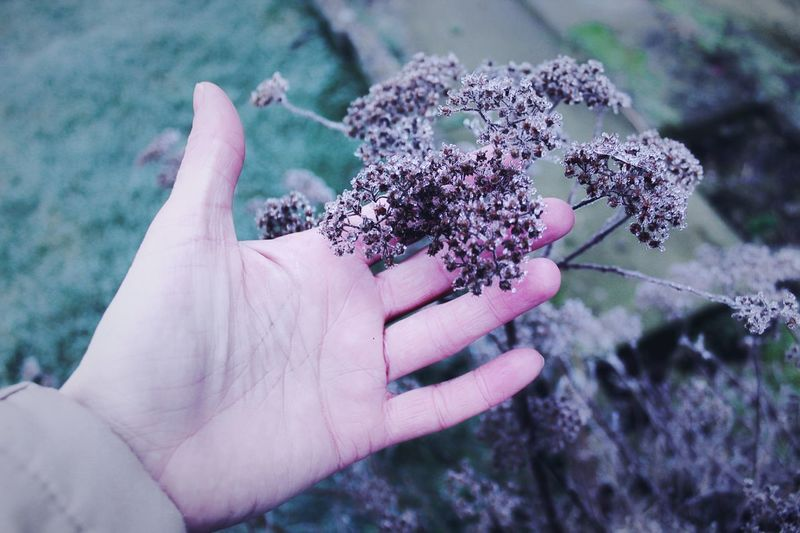 Winter Human Body Part One Person Human Hand Outdoors Day Real People Leisure Activity Nature Adults Only Close-up People Flower Adult