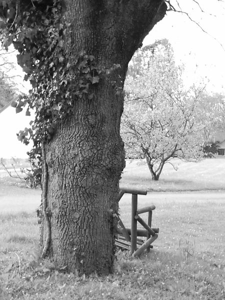 Black And White Broken Bench No People Trees And Nature Manor House Gardens Wales, UK